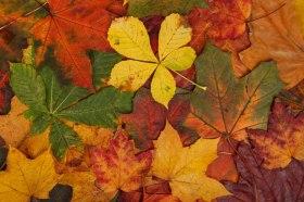 colorful-autumn-leaves-871286965014L8g8